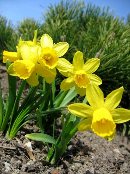 Spring Time – Review, Plan and Simplify!